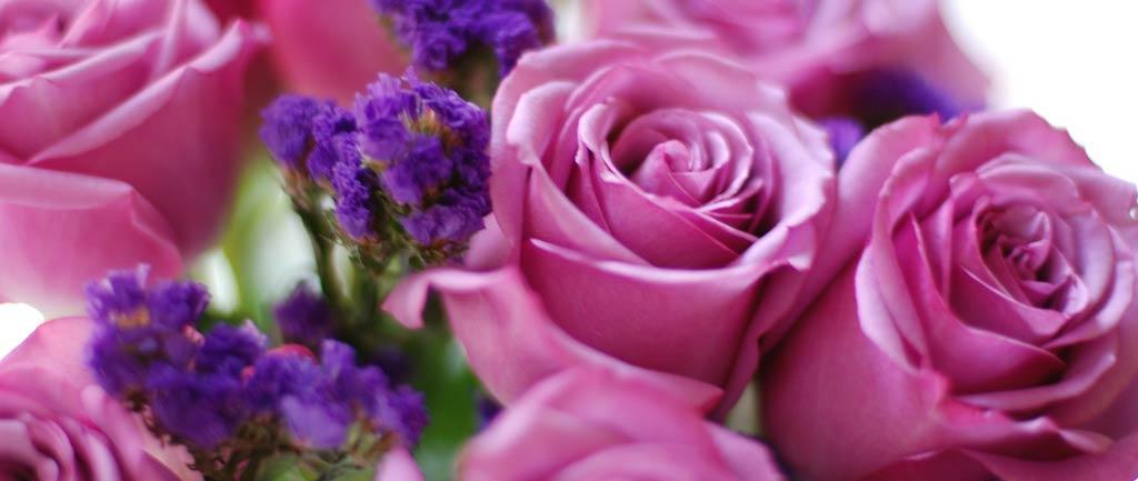 Rosa-Rosen-Valentinstag